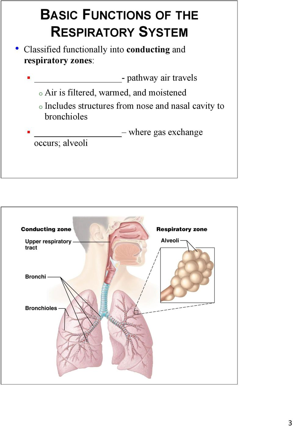 211 Overview Of The Respiratory System Pdf