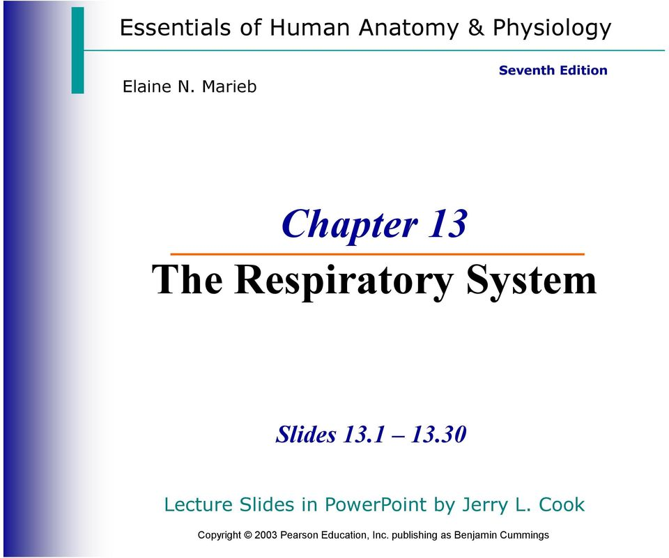 The Respiratory System PDF