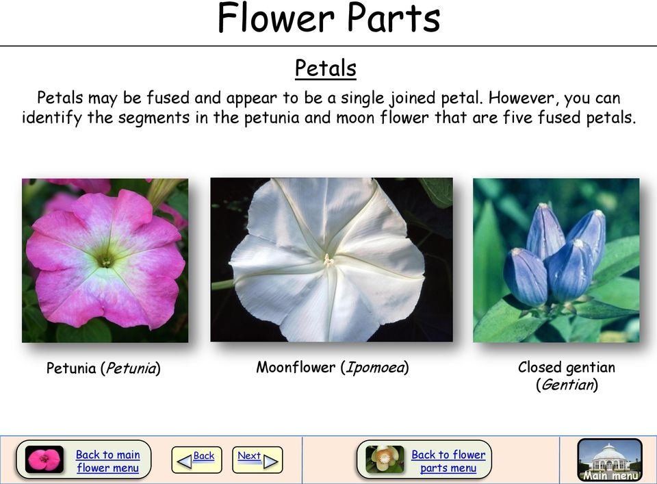 Unisexual flower diagram blank