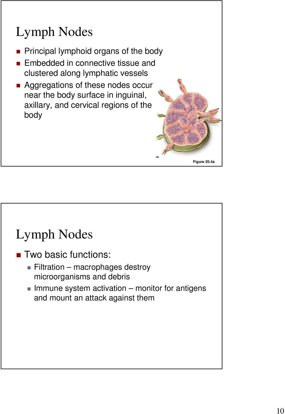 Lymphatic System Chapter 20 Lymphatic System Overview Consists