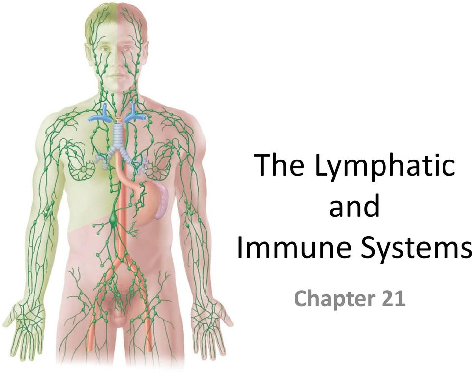 The Lymphatic And Immune Systems Chapter 21 Pdf