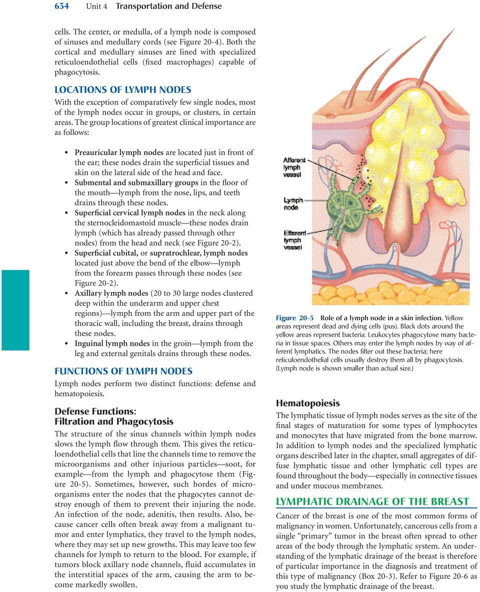 Lymphatic System Chapter 20 Chapter Outline Key Terms Chyle Lacteal