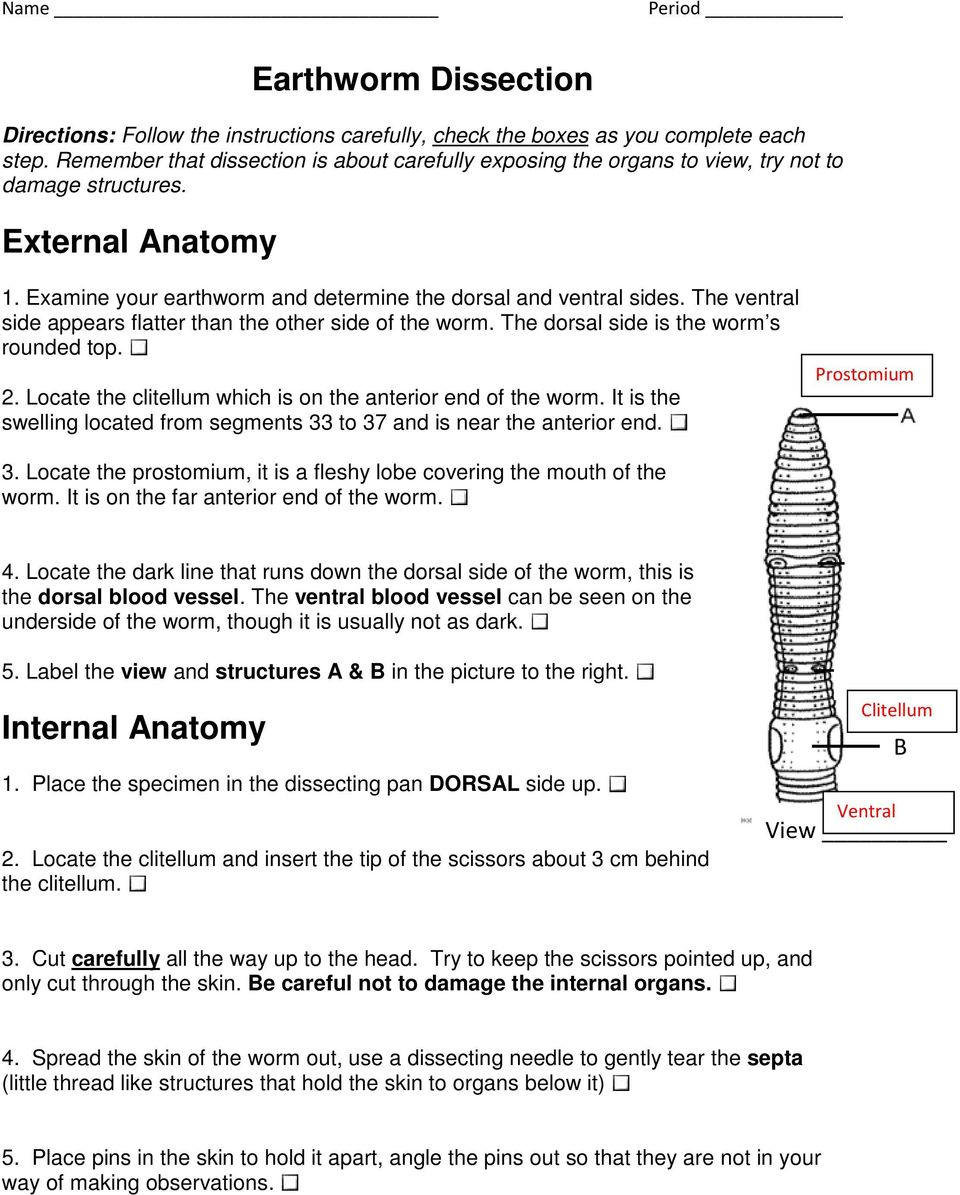 Earthworm Dissection - PDF