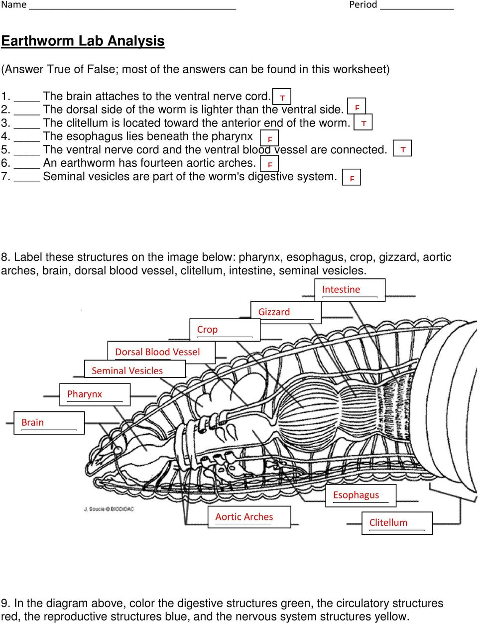 6th Grade Earthworm Internal Anatomy Diagram - Complete Wiring ...