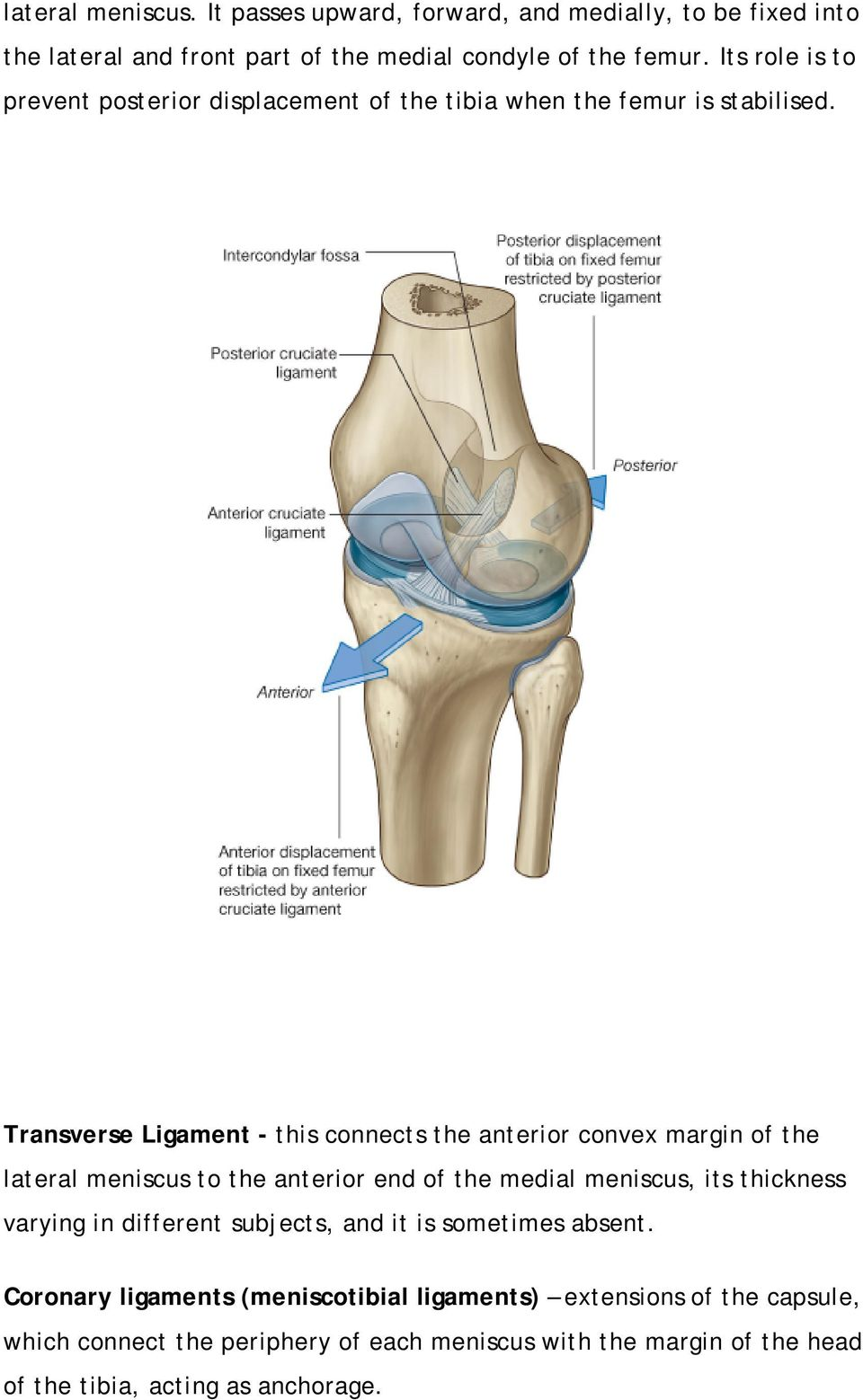 The Knee Joint Osteology Pdf