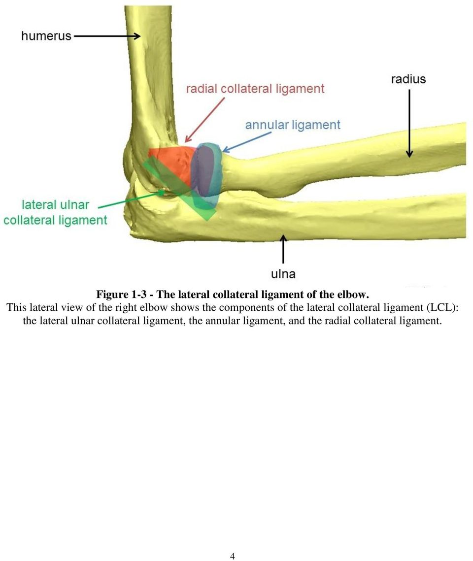 Optimizing The Rehabilitation Of Elbow Lateral Collateral Ligament