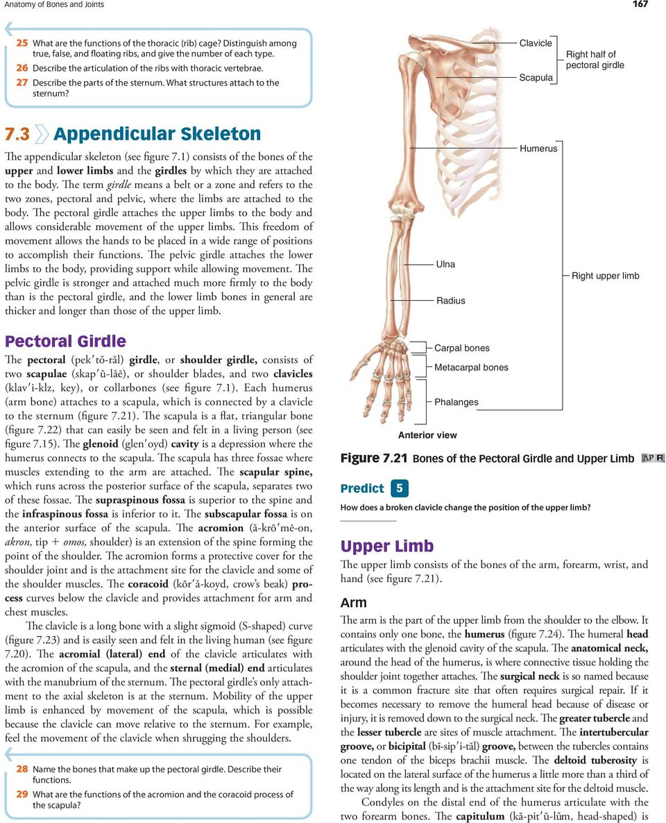 Anatomy of Bones and Joints - PDF