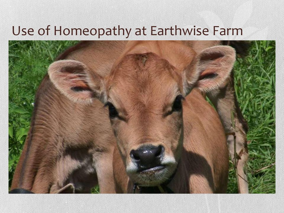 homeopathy for the herd a farmers guide to low cost nontoxic veterinary care of cattle