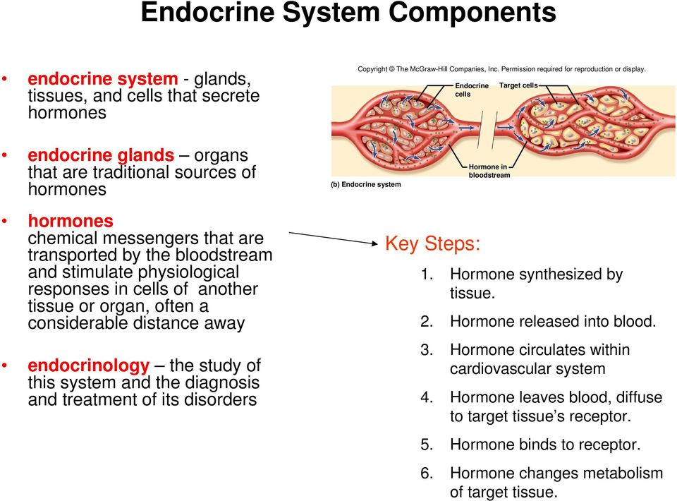 Chapter 18 An Introduction To The Endocrine System Hormone