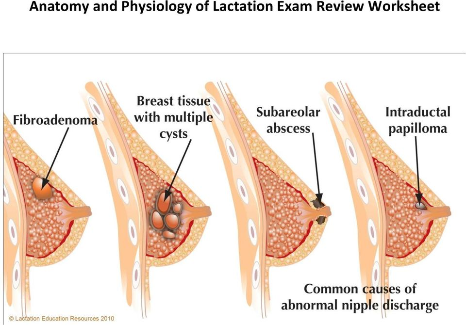 Anatomy and Physiology of Lactation Exam Review Worksheet - PDF