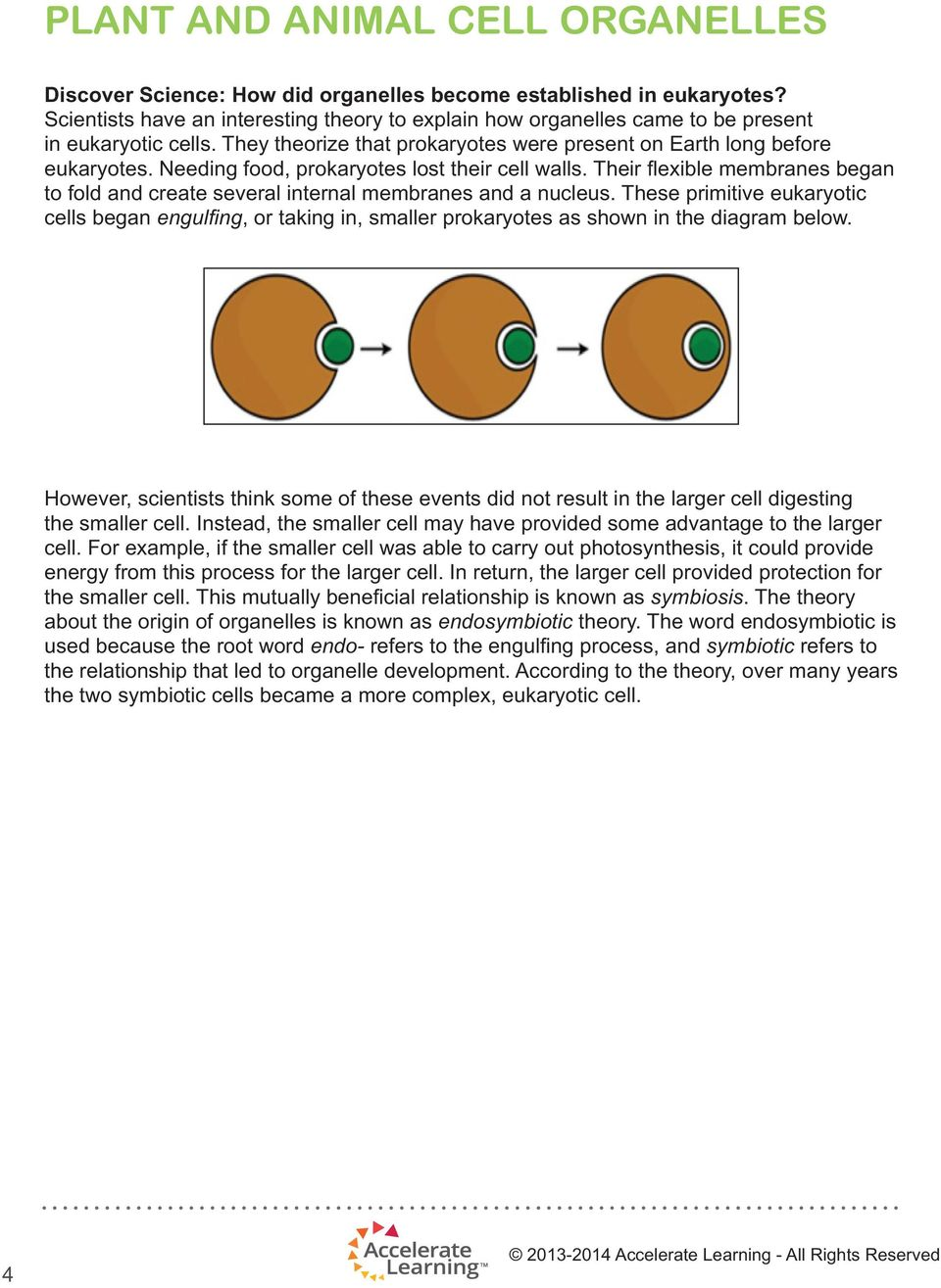 Plant And Animal Cell Organelles Pdf Prokaryotic Cells Diagram Below Learn About