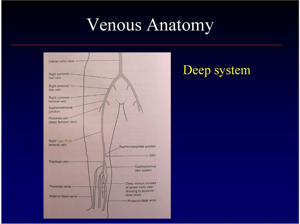 Diagnosis And Treatment Of Venous Insufficiency And Varicose Veins Pdf