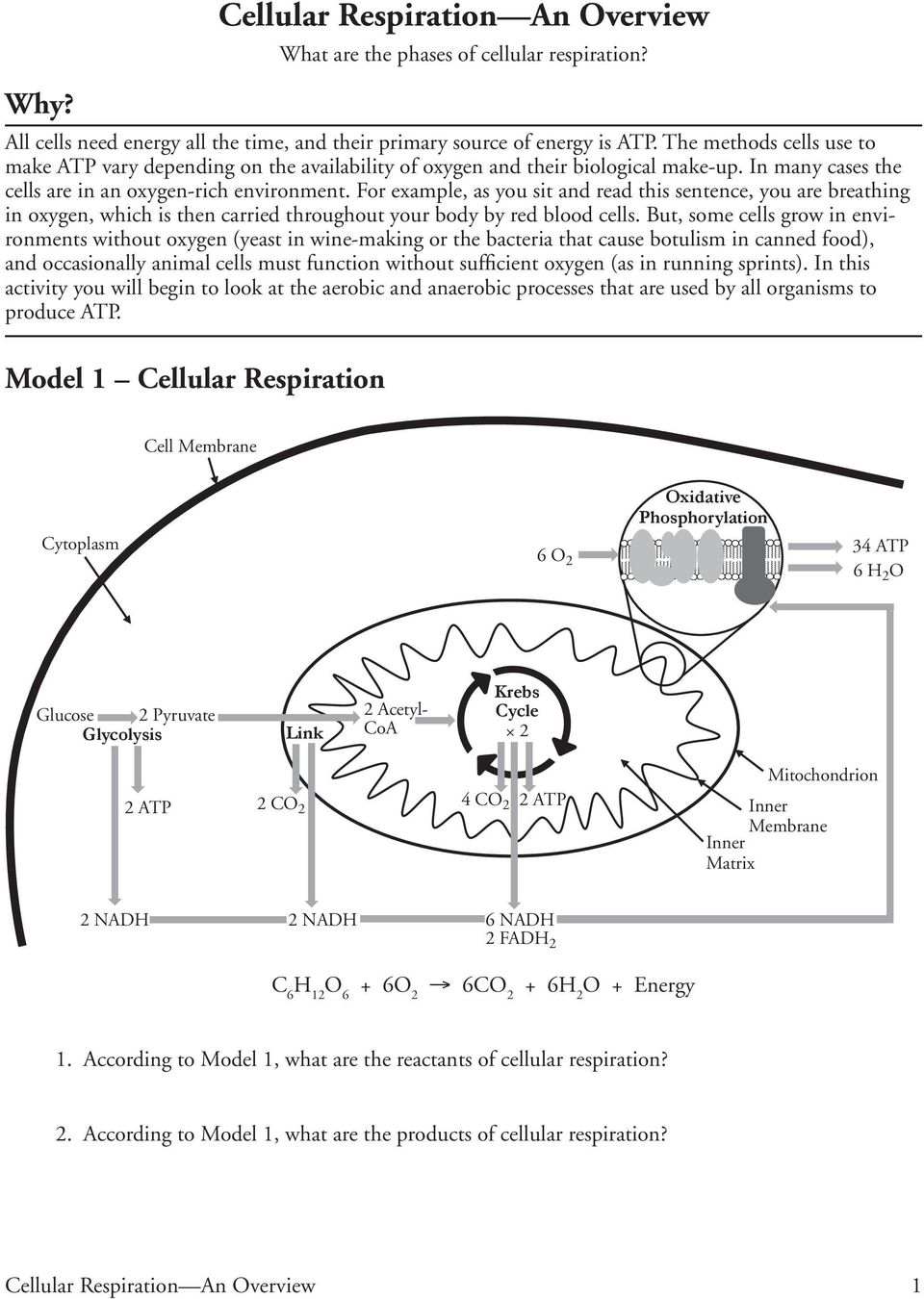 Cellular Respiration An Overview Pdf Free Download