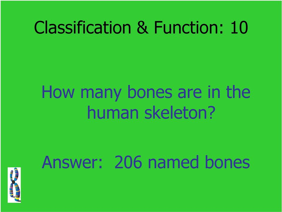 bones are in the human