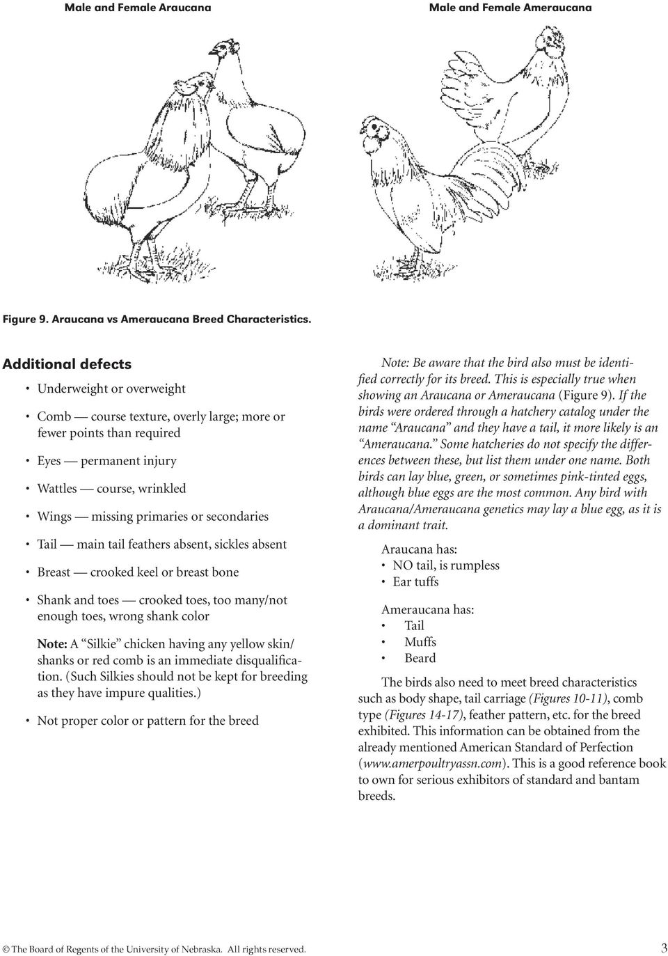 exhibiting 4 h poultry pdf rh docplayer net Poultry Showmanship Scorecard 4-H Poultry Showmanship Guide