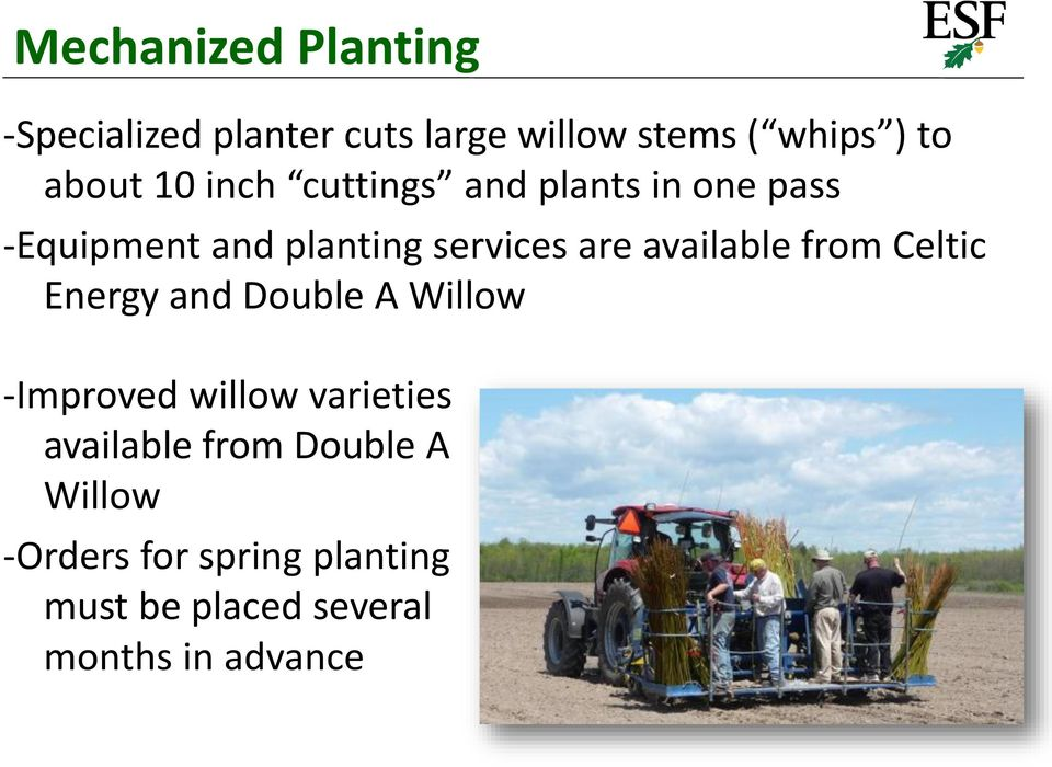 available from Celtic Energy and Double A Willow -Improved willow varieties