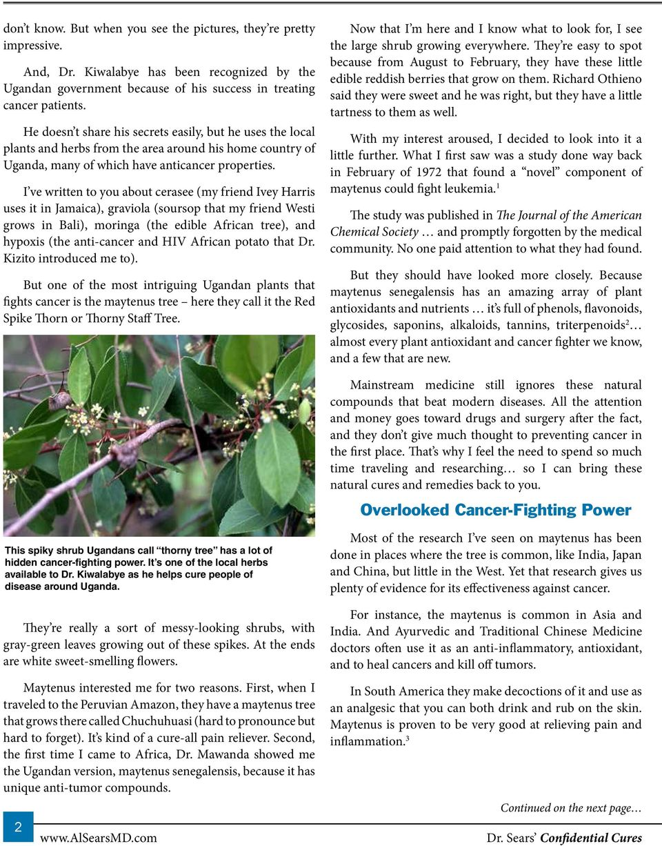 Thorny Tree is Overlooked Cure from Celebrated Cancer Doc s Herbal