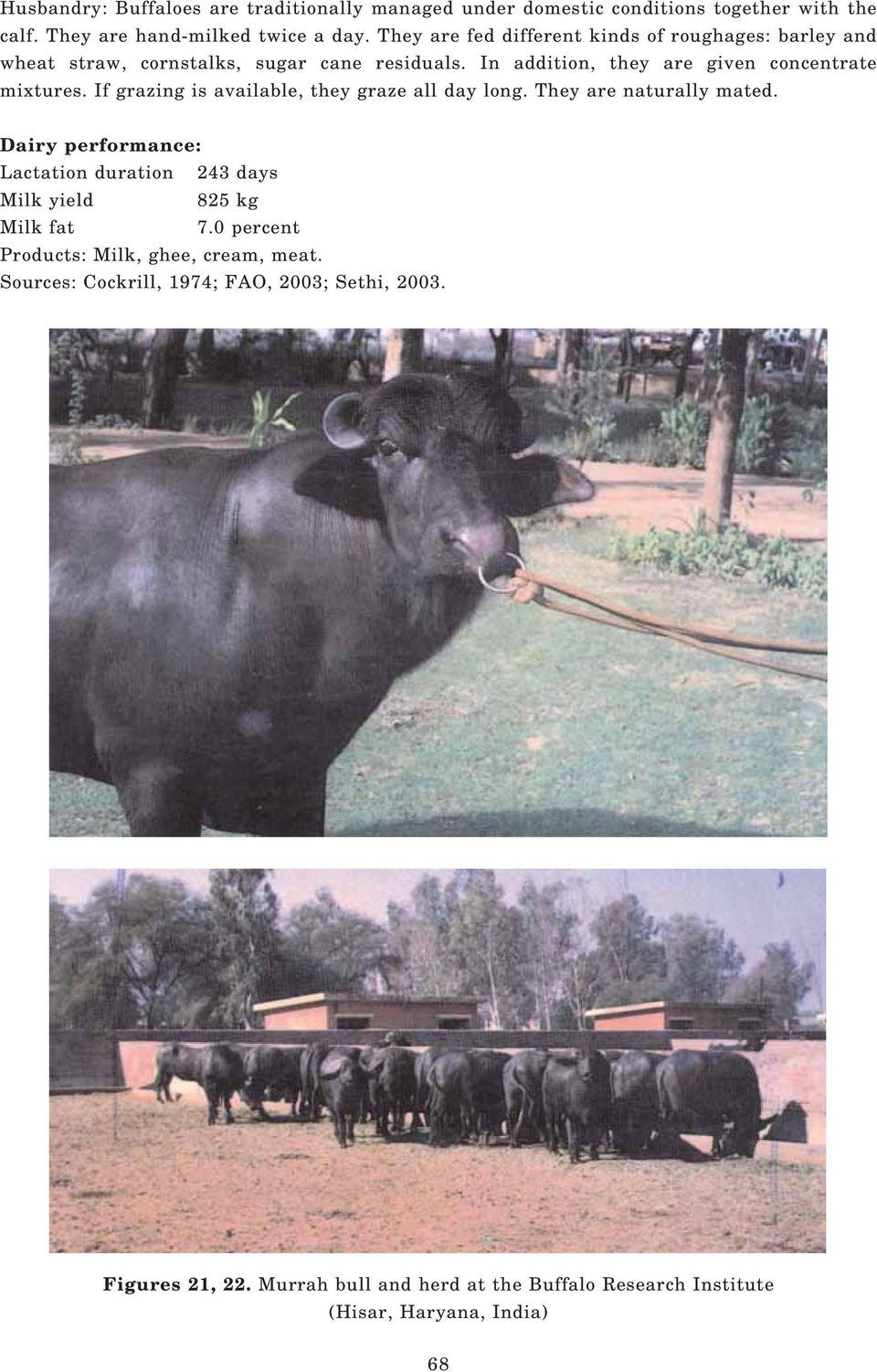 Chapter III BUFFALO BREEDS AND MANAGEMENT SYSTEMS  Bianca