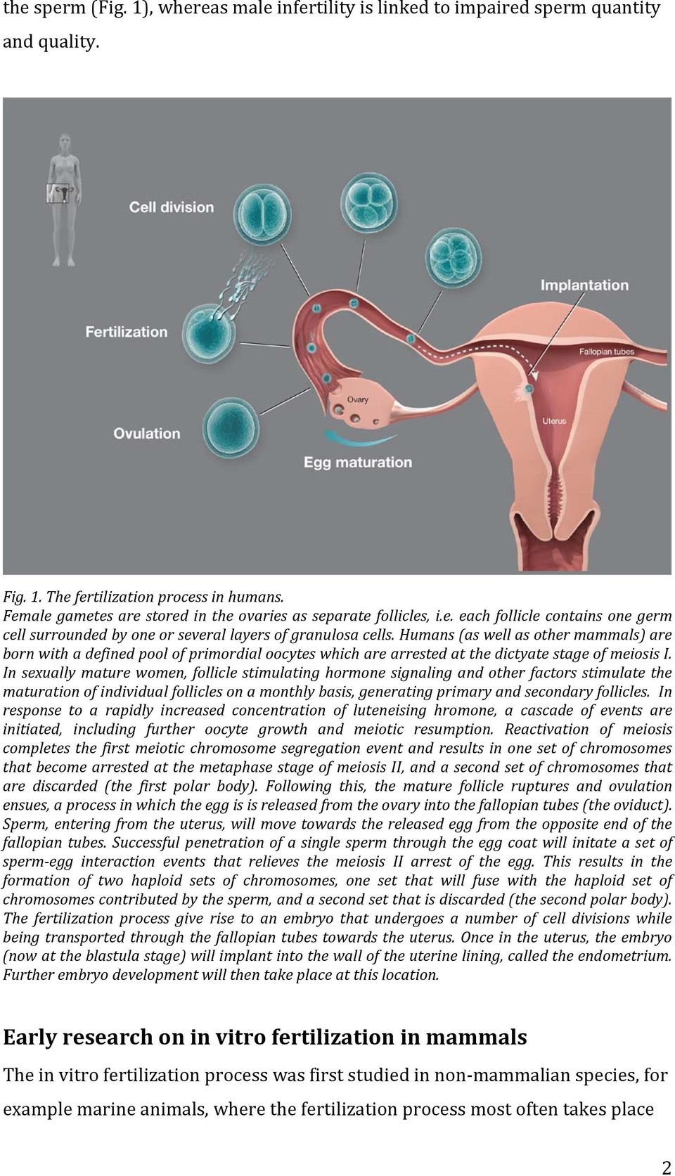 human in vitro fertilization - pdf