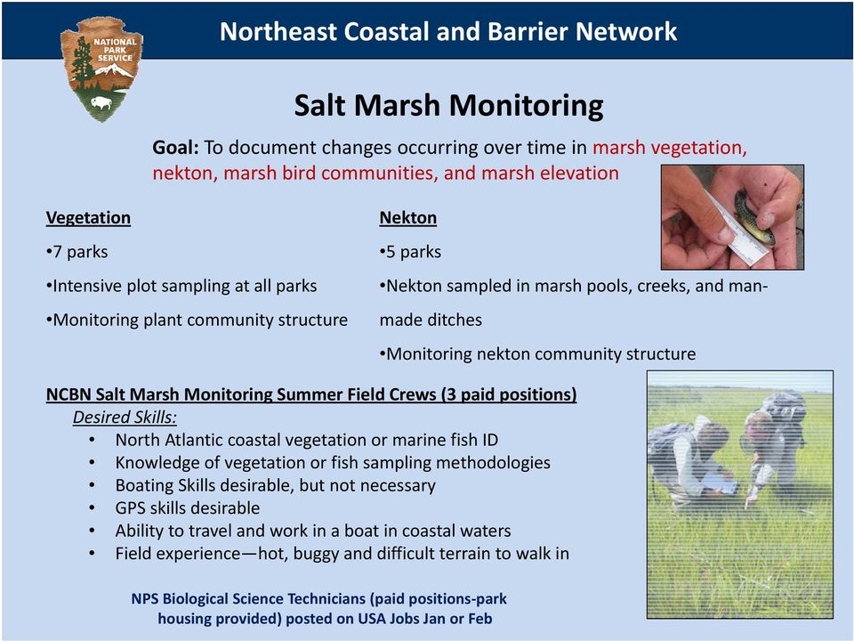 Marsh Monitoring Summer Field Crews (3 paid positions) Desired Skills: North Atlantic coastal vegetation or marine fish ID Knowledge of vegetation or fish sampling methodologies Boating Skills