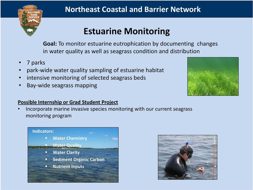 of selected seagrass beds Bay wide seagrass mapping Possible Internship or Grad Student Project Incorporate marine invasive species