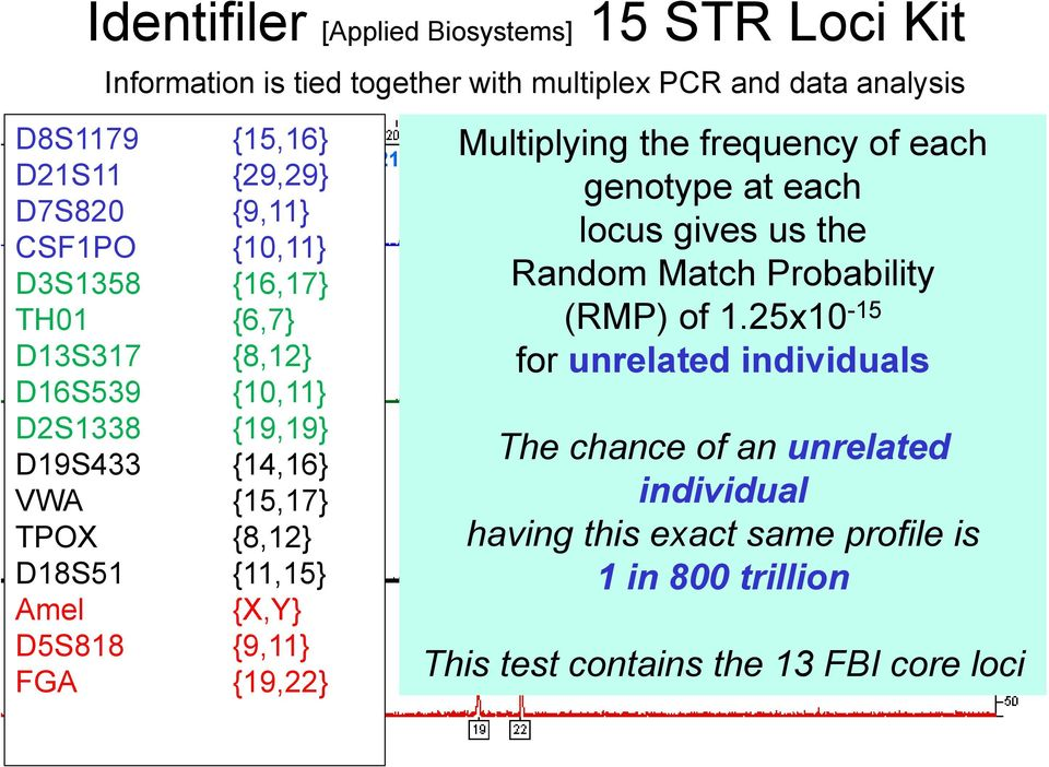 {11,15} Amel {X,Y} FGA {19,22} D21S11 Multiplying the frequency of each D13S317 TPOX FGA genotype D7S820 at CSF1PO each locus gives us the Random Match Probability (RMP) D16S539