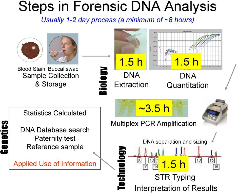 5 h DNA Extraction DNA Quantitation Statistics Calculated DNA Database search Paternity test
