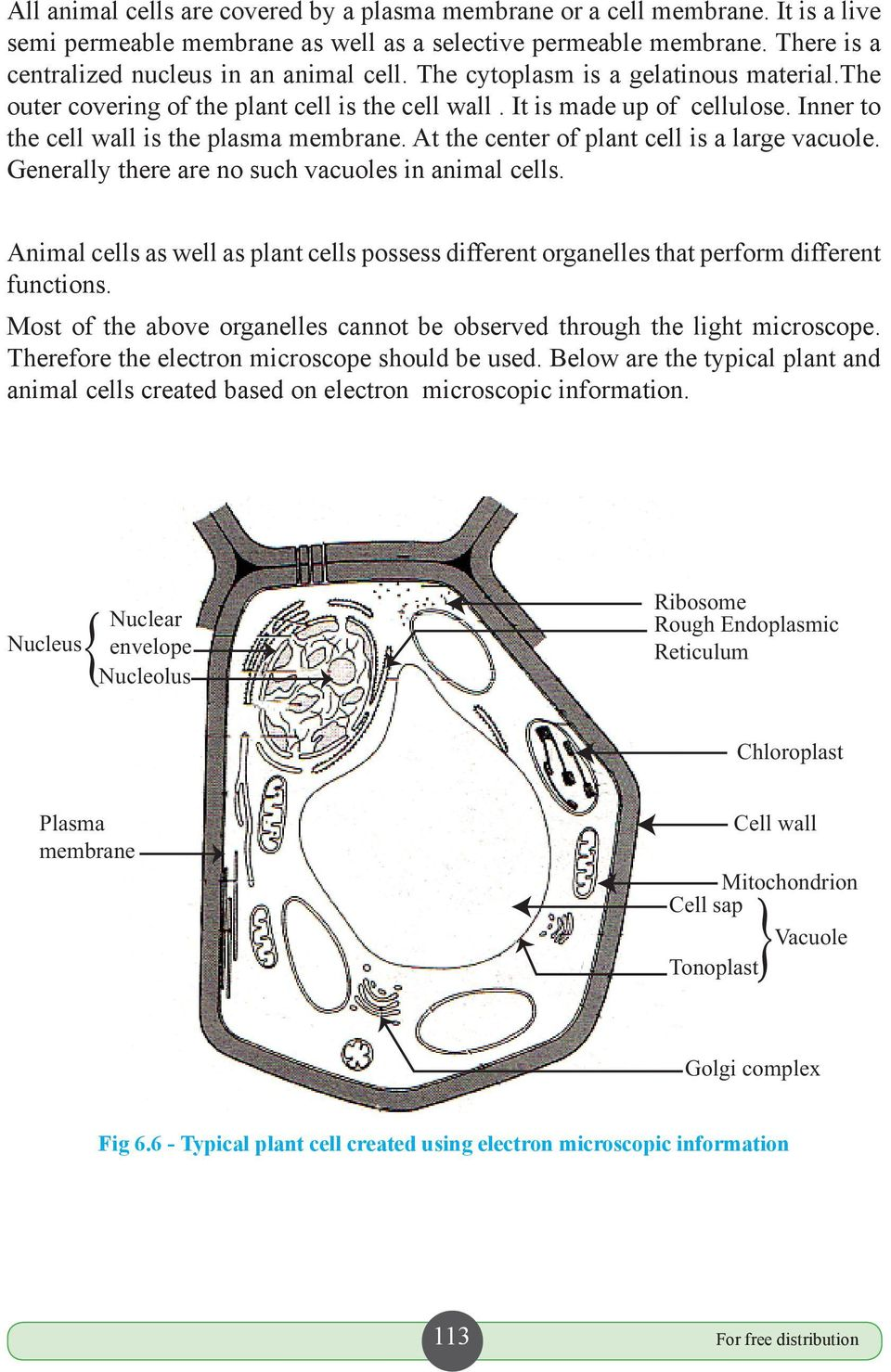 At the center of plant cell is a large vacuole. Generally there are no such vacuoles in animal cells. Animal cells as well as plant cells possess different organelles that perform different functions.