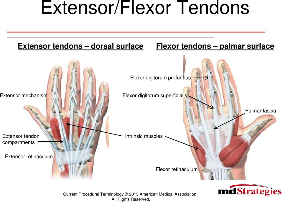 Coding For Difficult Tendon Repairs And Transfers Current