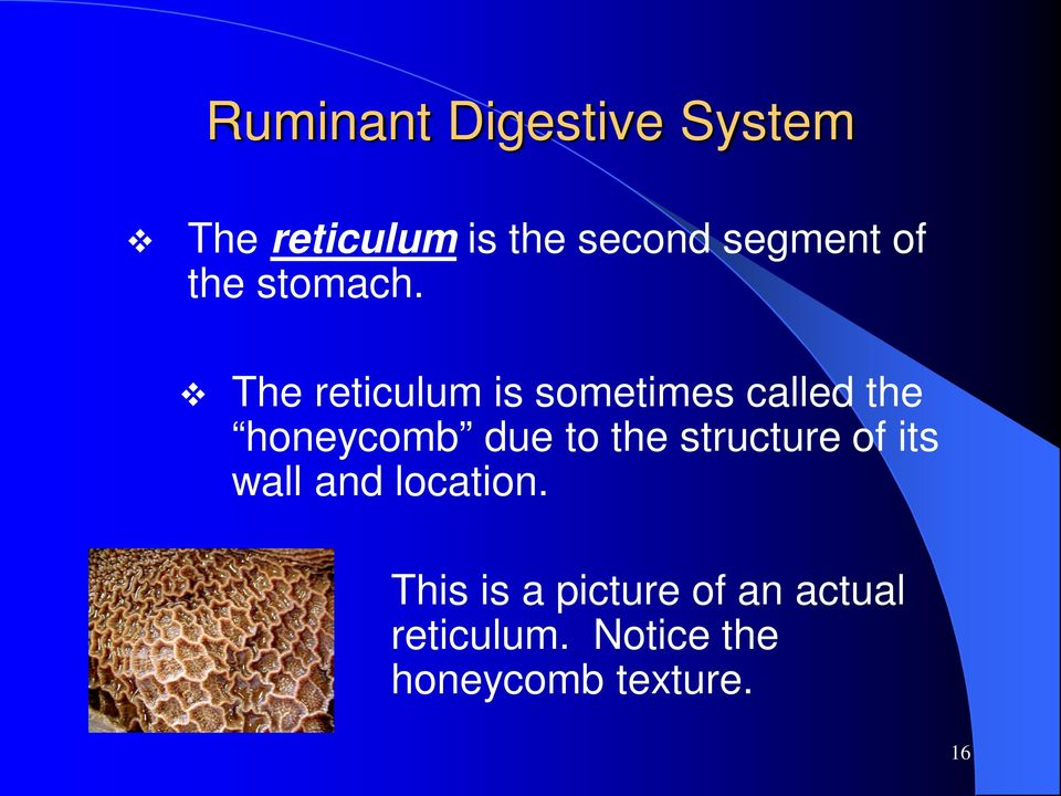 The reticulum is sometimes called the honeycomb due to the