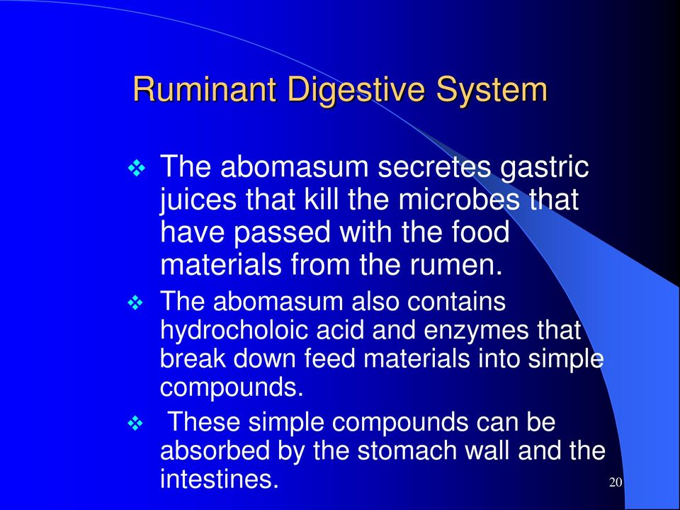 The abomasum also contains hydrocholoic acid and enzymes that break down feed
