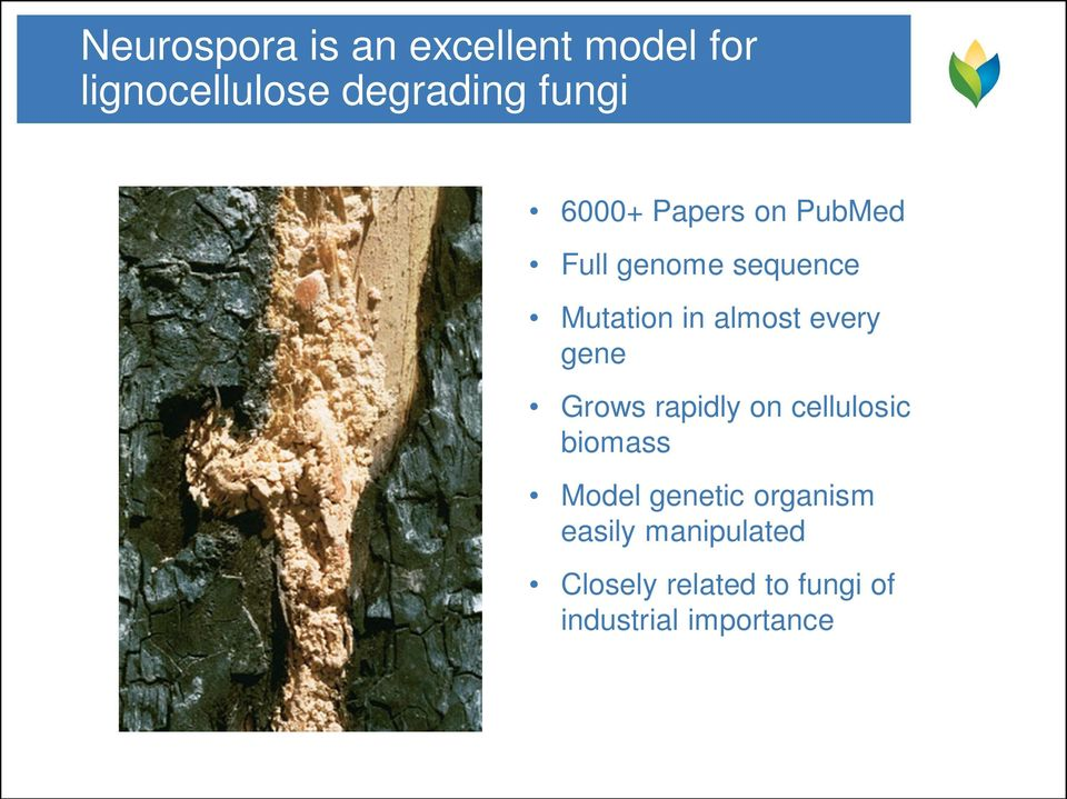 every gene Grows rapidly on cellulosic biomass Model genetic