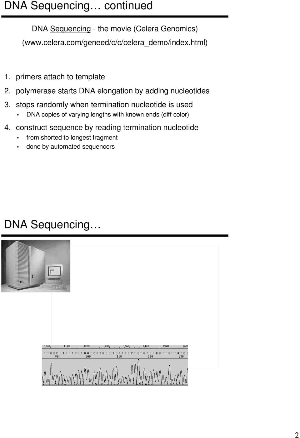 polymerase starts DNA elongation by adding nucleotides 3.