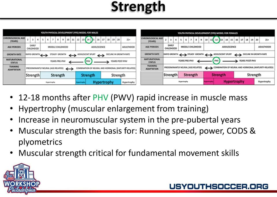 system in the pre-pubertal years Muscular strength the basis for: Running
