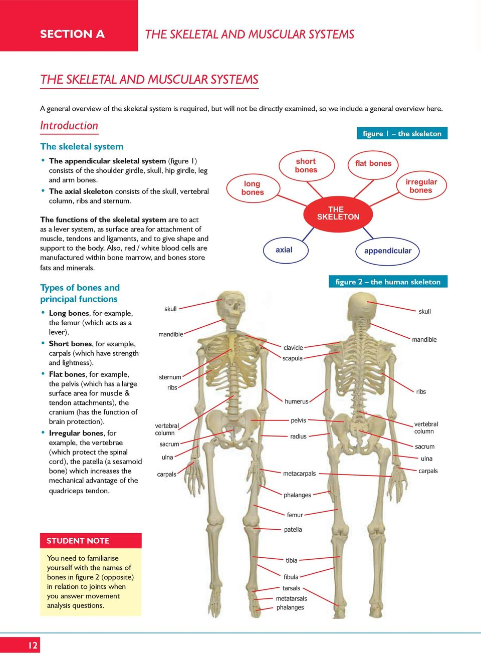 The Skeletal And Muscular Systems Pdf