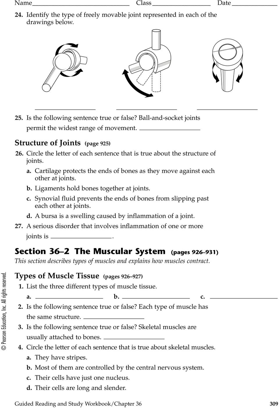 Skeletal, Muscular, and Integumentary Systems - PDF