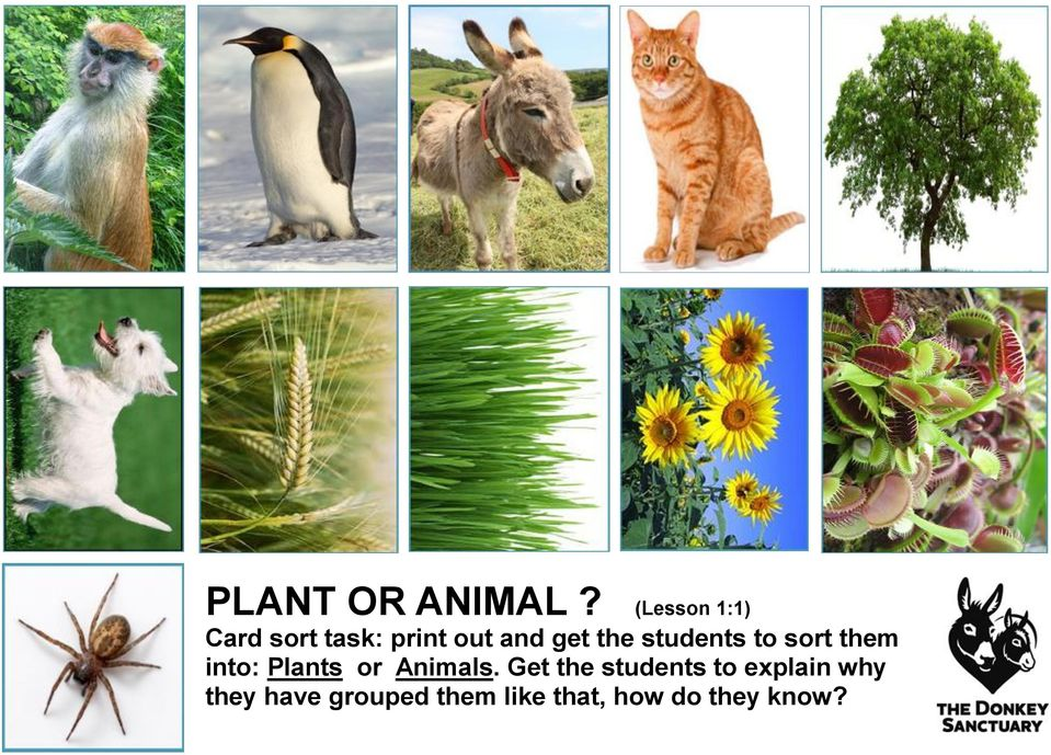 the students to sort them into: Plants or Animals.