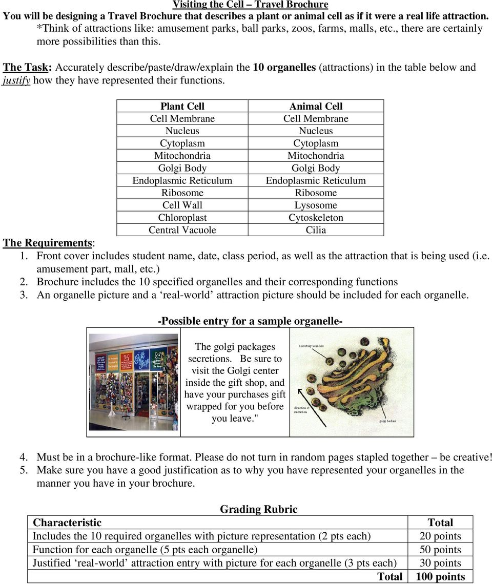 Cellular Structure And Function Projects Pdf