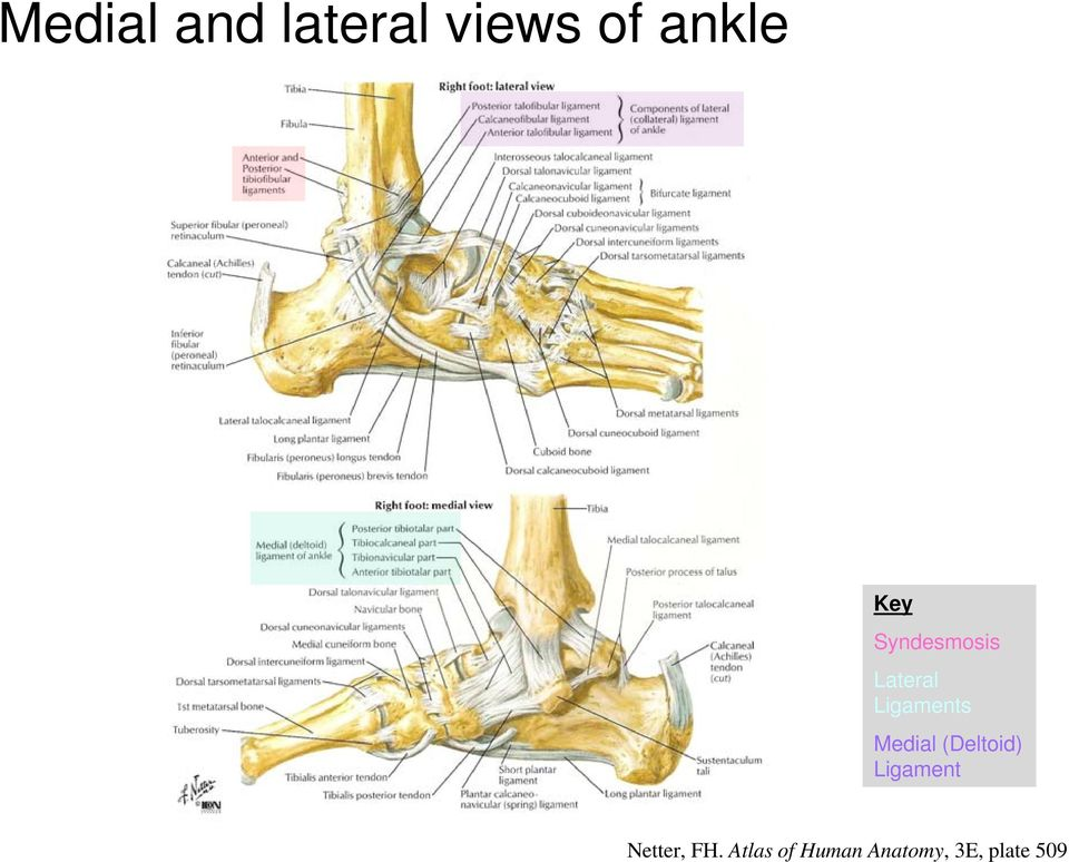 Approach to acute ankle injury: Does this patient have a fracture ...