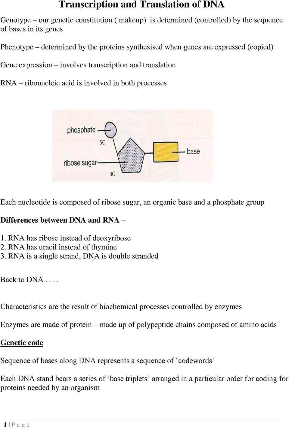 a phosphate group Differences between DNA and RNA 1. RNA has ribose instead of deoxyribose 2. RNA has uracil instead of thymine 3. RNA is a single strand, DNA is double stranded Back to DNA.
