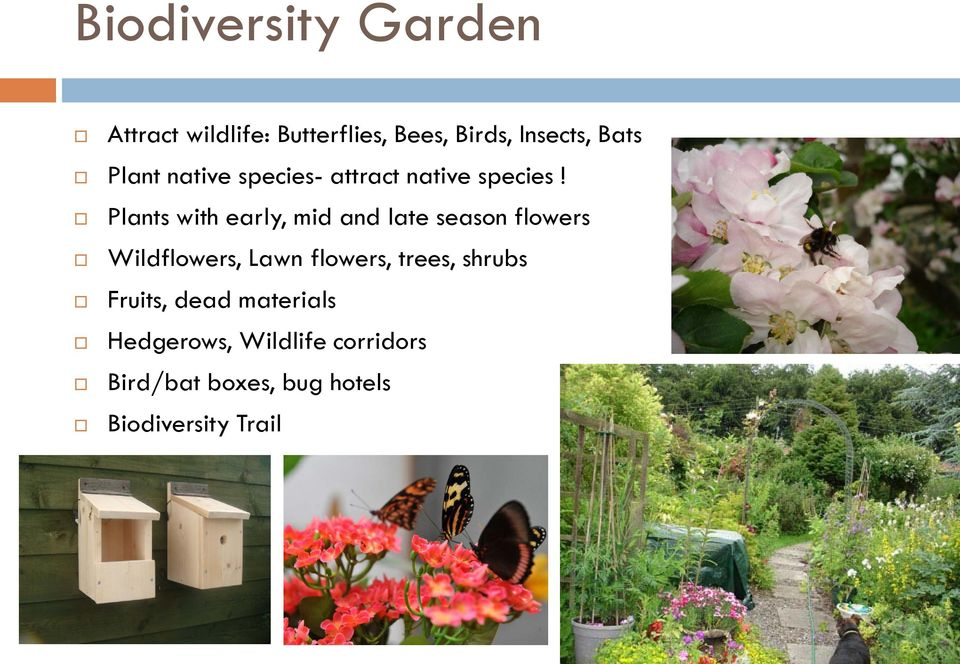 Plants with early, mid and late season flowers Wildflowers, Lawn flowers,