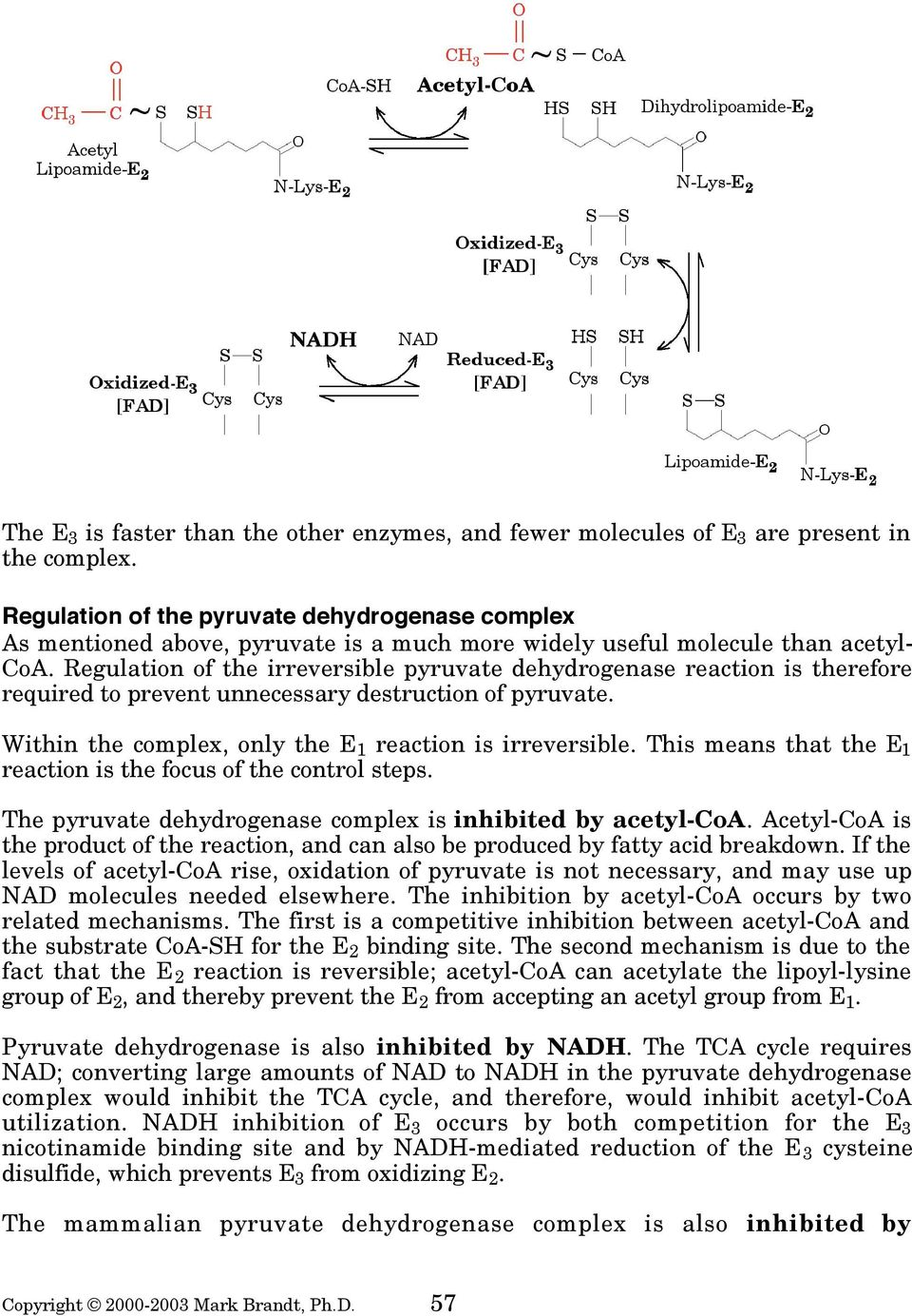 Regulation of the irreversible pyruvate dehydrogenase reaction is therefore required to prevent unnecessary destruction of pyruvate. Within the complex, only the E 1 reaction is irreversible.
