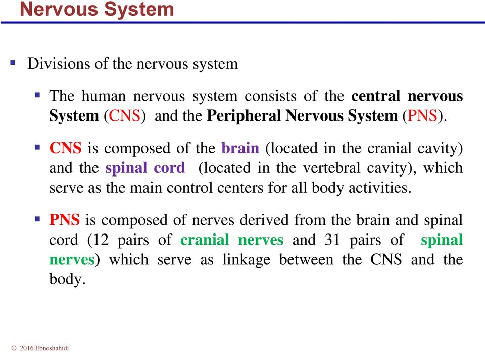 CNS is composed of the brain (located in the cranial cavity) and the spinal cord (located in the vertebral cavity), which serve