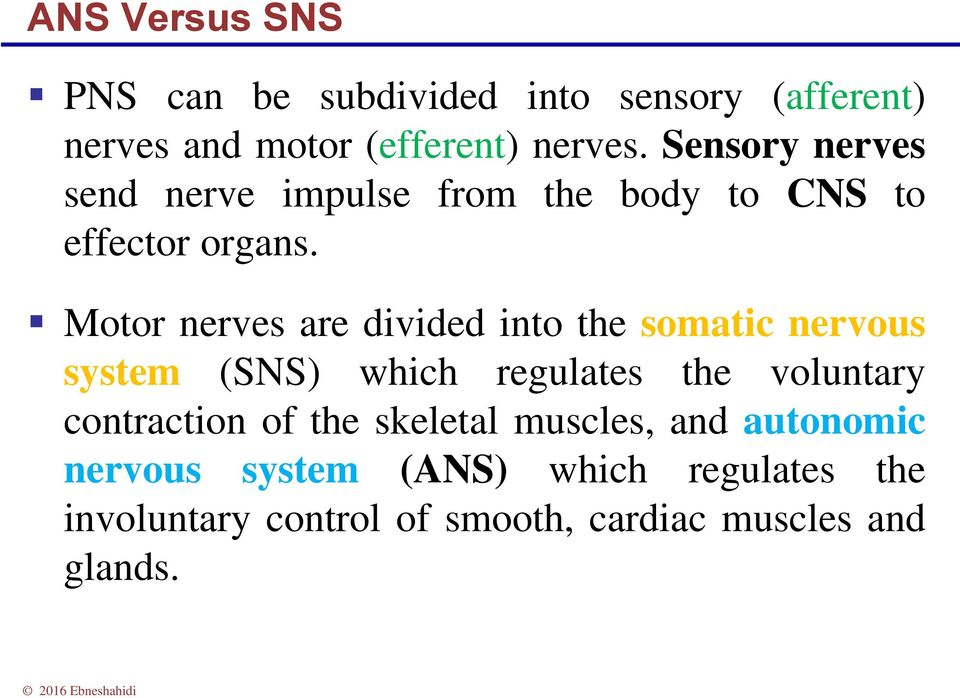 Motor nerves are divided into the somatic nervous system (SNS) which regulates the voluntary