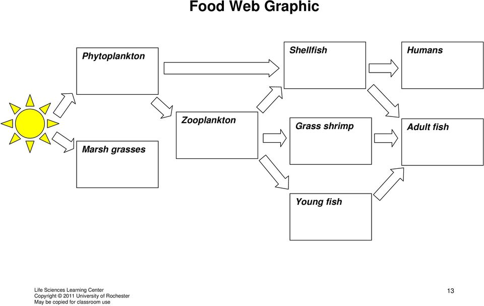 Humans Zooplankton Grass