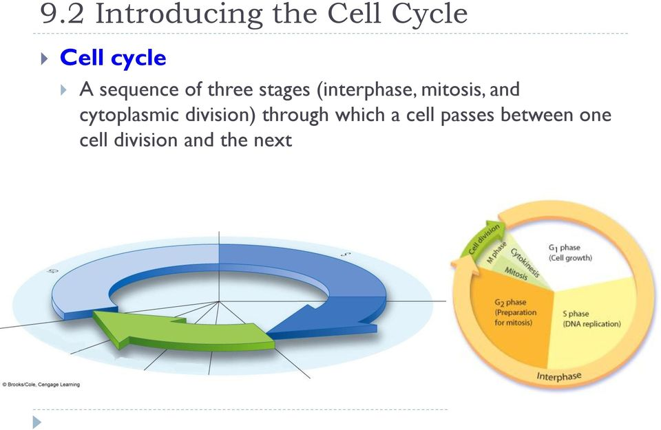 mitosis, and cytoplasmic division) through