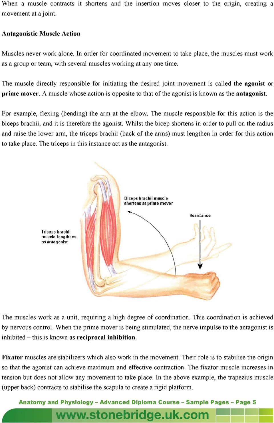 Muscle Fibres. Anatomy and Physiology Advanced Diploma Course Sample ...