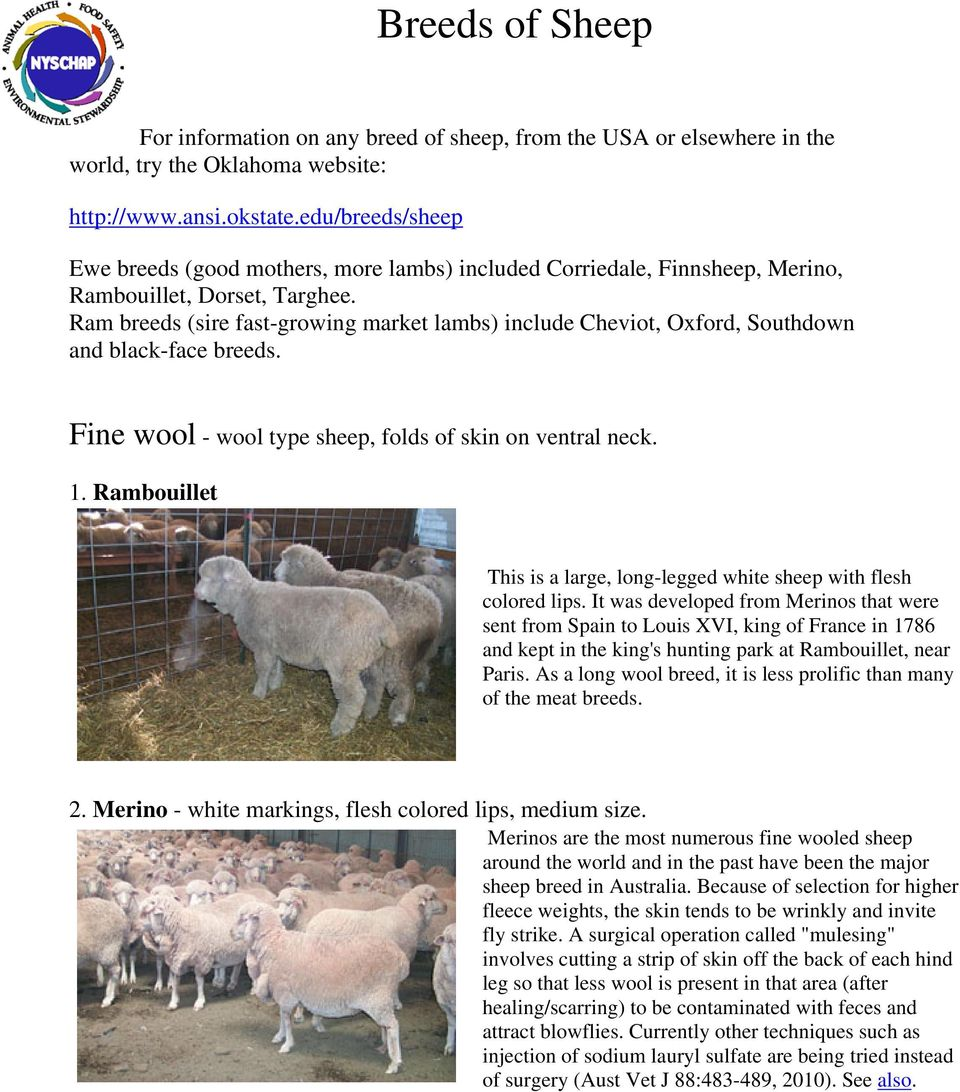 Breeds Of Sheep For Information On Any Breed Of Sheep From The Usa