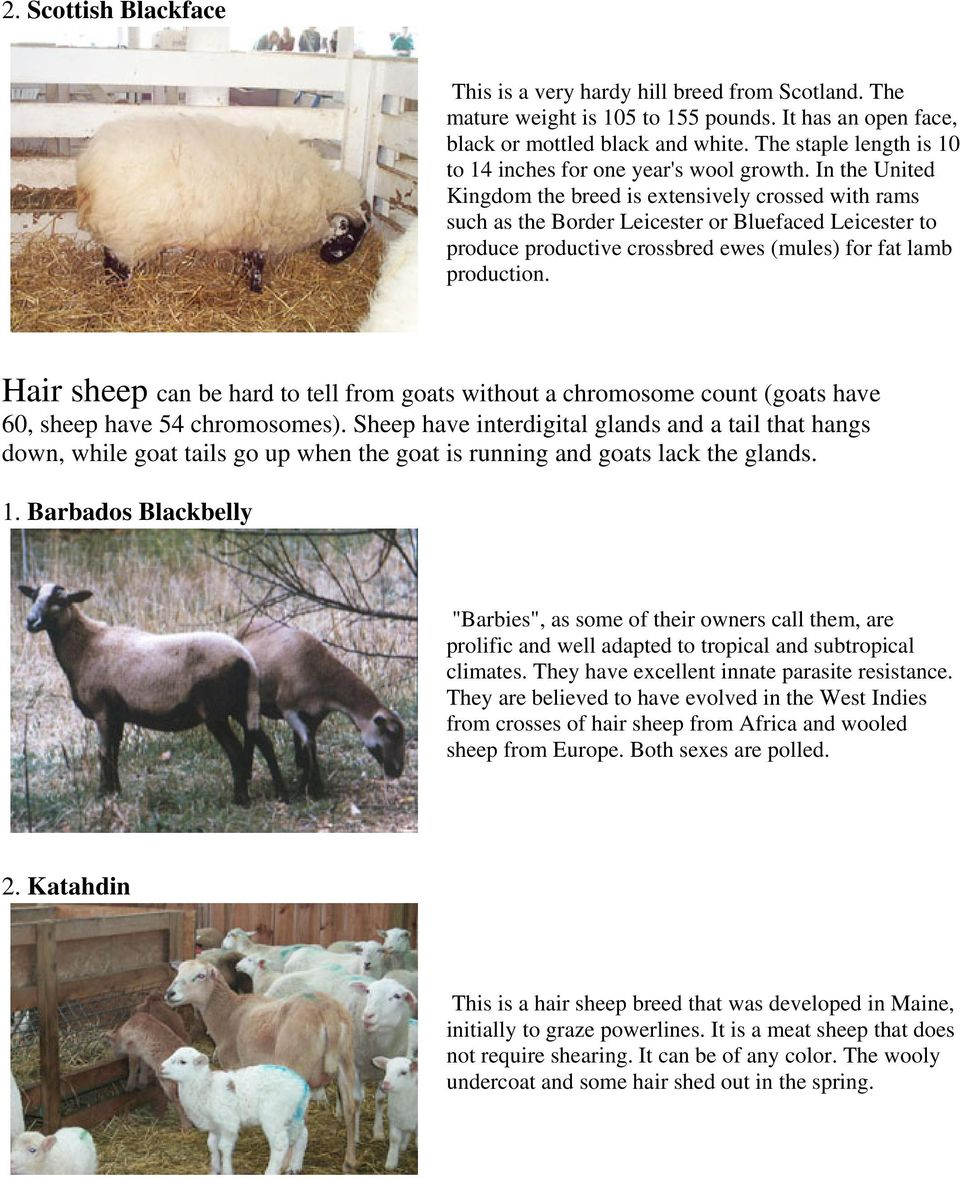Breeds of Sheep  For information on any breed of sheep, from