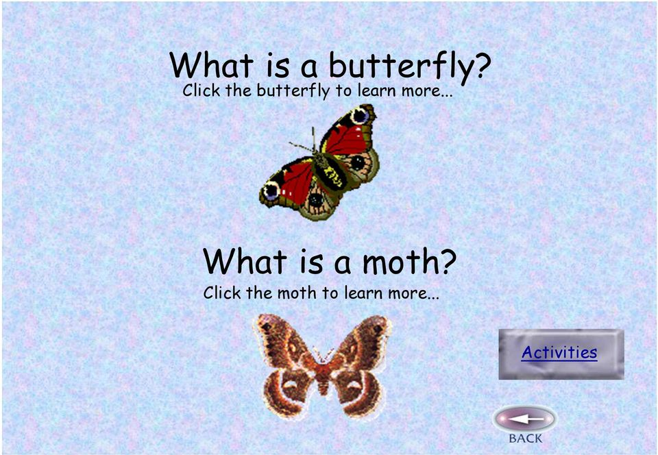 more... What is a moth?